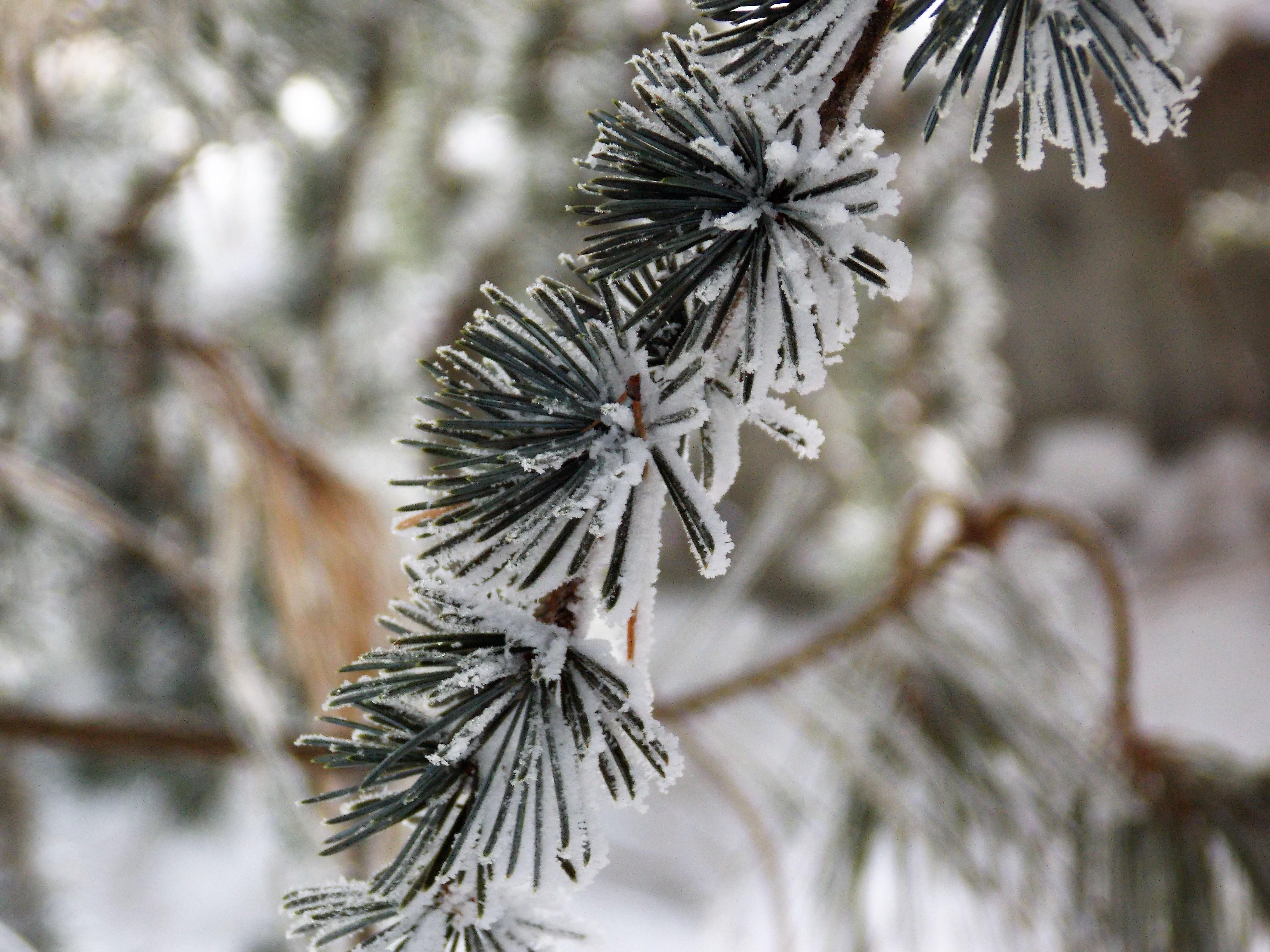 Frozen. În România.