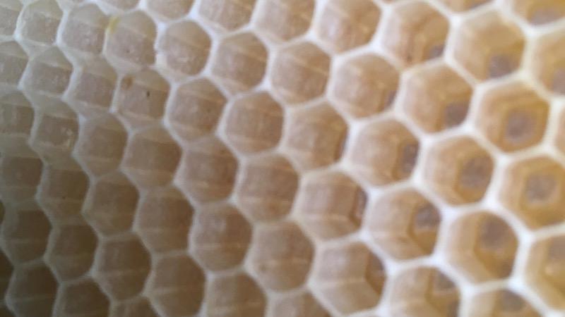 ミツバチの巣房のアップ写真