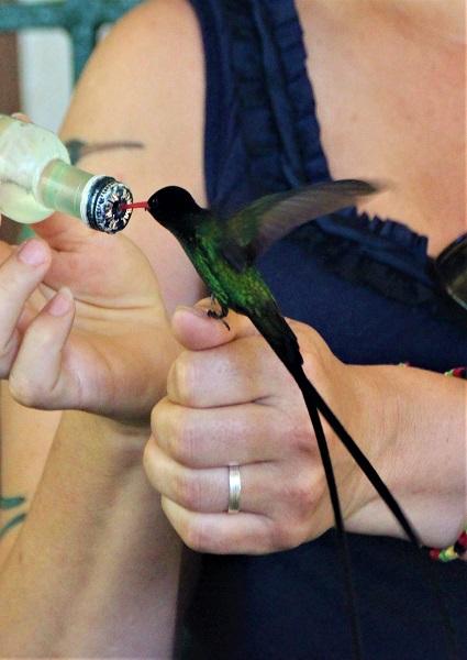 Rocklands Bird Sanctuary Jamaika