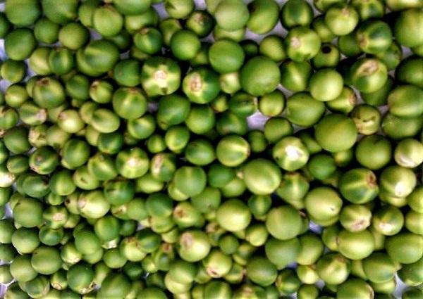Susumba- würziger Wildwuchs für Suppen und Eintöpfe