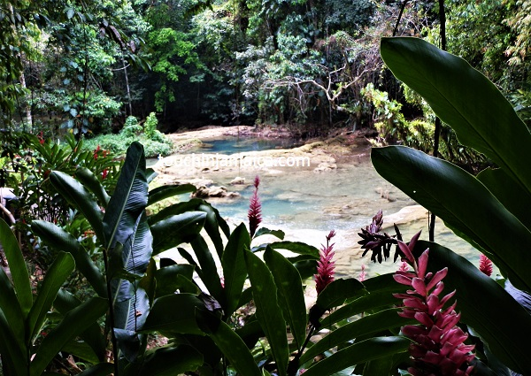 Wasserfälle auf Jamaika- die Y.S.Falls in St.Elizabeth