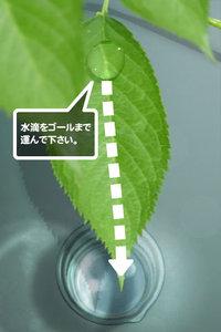 app_game_aquaforest2_3.jpg