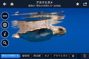 app_travel_fotopedia_wild_friends_10.jpg