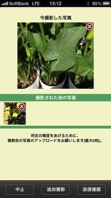 app_edu_plant_detection_5.jpg