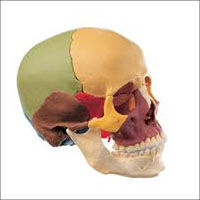 cranial sacral therapy is new age medicine