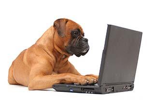 dog-laptop