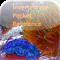 iphone-app-reviews-invertebrate-pocket-reference
