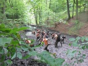Tough Mudder NRW 2015, Hindernis Mud Mile 3