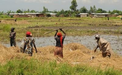 Burundi_agriculture