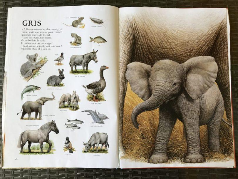 l'imagier des animaux de André Boos - GRIS