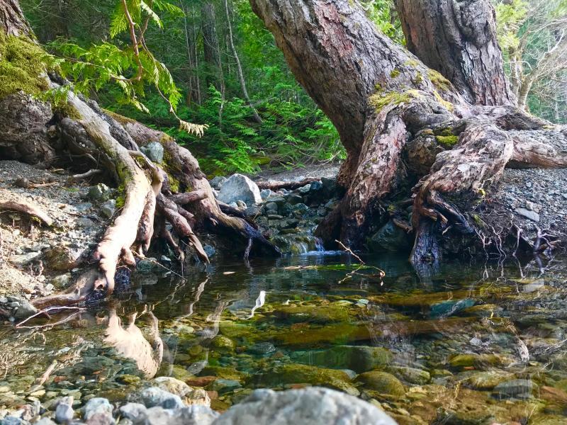 Vancouver-Island-Fluss