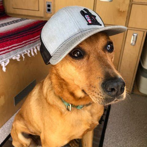 Hund im VW Bus