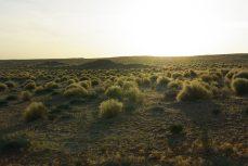 desert tunisie