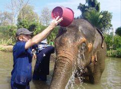 Volontariat éléphants en Thailande