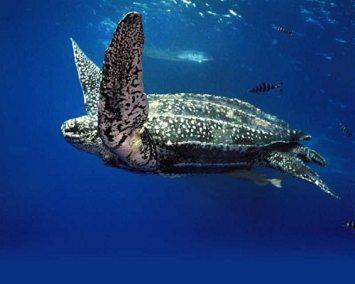 جزر السلاحف في ولايه صباح