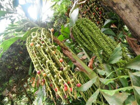حديقة التوابل في جزيرة بينانج
