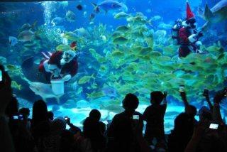 عالم ما تحت الماء في لنكاوي
