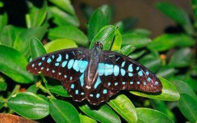 حديقه الفراشات Kuala Lumpur Butterfly Park