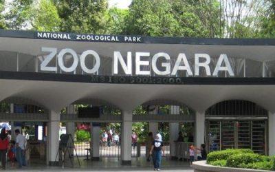 حديقة الحيوان نيجارا في كوالالمبور zoo negara