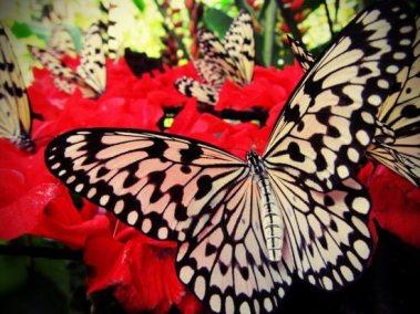 butterflyfarm33