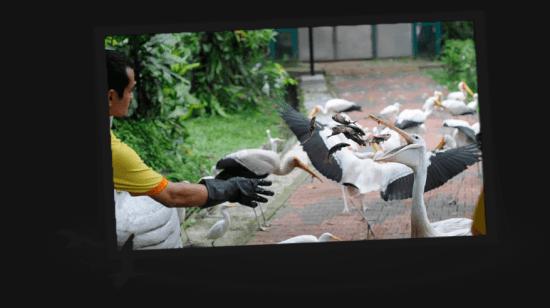 حديقة الطيور Bird Park