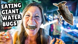 BUGS + INCREDIBLE Thai Street Food | Chiang Mai Sunday Night Market