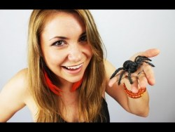 [How To]: Catch a pet SPIDER