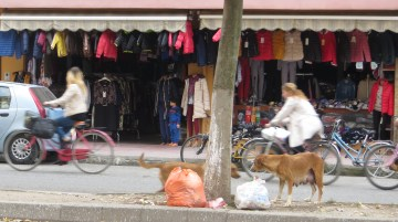 Bikes and stray dogs