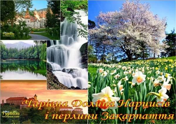 Чарівна_Долина_Нарцисів_і_перлини_Закарпаття