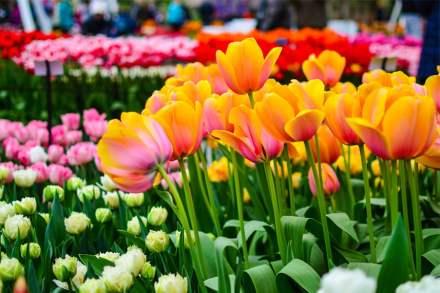 Цветочные туры