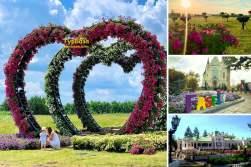 Квітковий рай Київщини, Добропарк, Острів Сакур