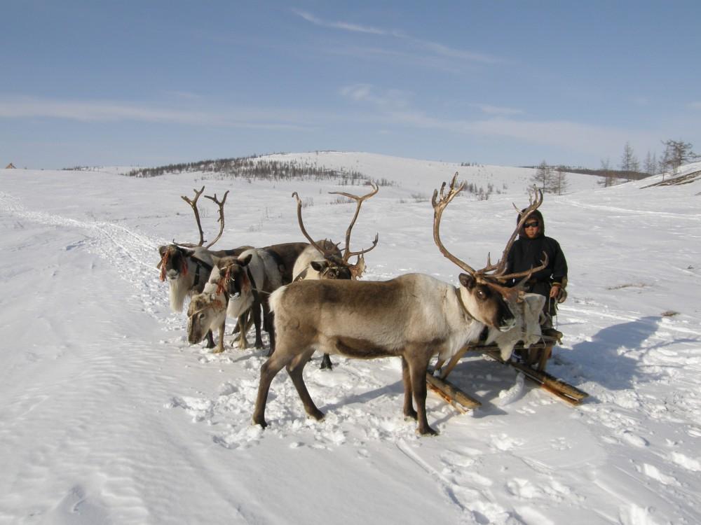 A rénszarvasok védelme miatt utasították el a szélerőmű építését Norvégiában | Sokszínű vidék