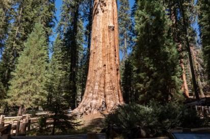 2018-09-20 - Sequoia Park-1