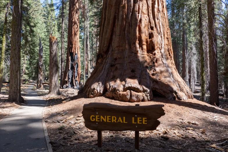 2018-09-20 - Sequoia Park-13