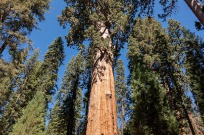 2018-09-20 - Sequoia Park-2