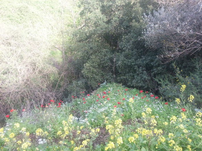 Wildflowers in the Golan