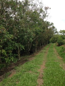 coffee farm walk
