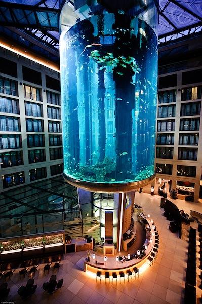 Plus Grand Aquarium Du Monde : grand, aquarium, monde, Ascenseur, Coeur, Grand, Aquarium, Monde