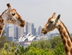 Toronga Zoo Sydney