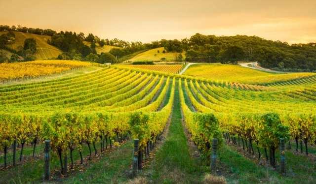 tourism-guide-australia-adelaide-hills-wine-region