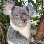 tourism-guide-Australia-Currumbin-wildlife-sanctuary