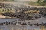 Smart Travel African Safaris Ltd
