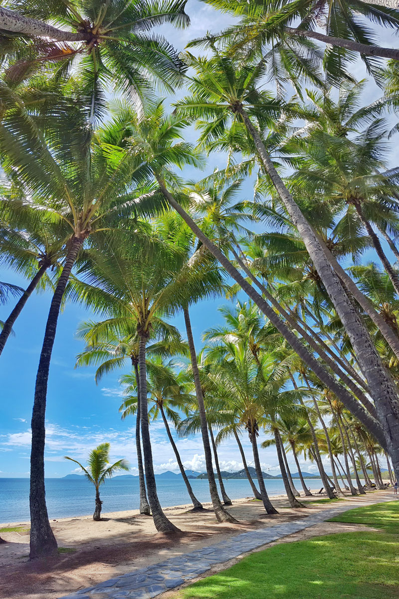 Palm Cove  Official Tourism Site