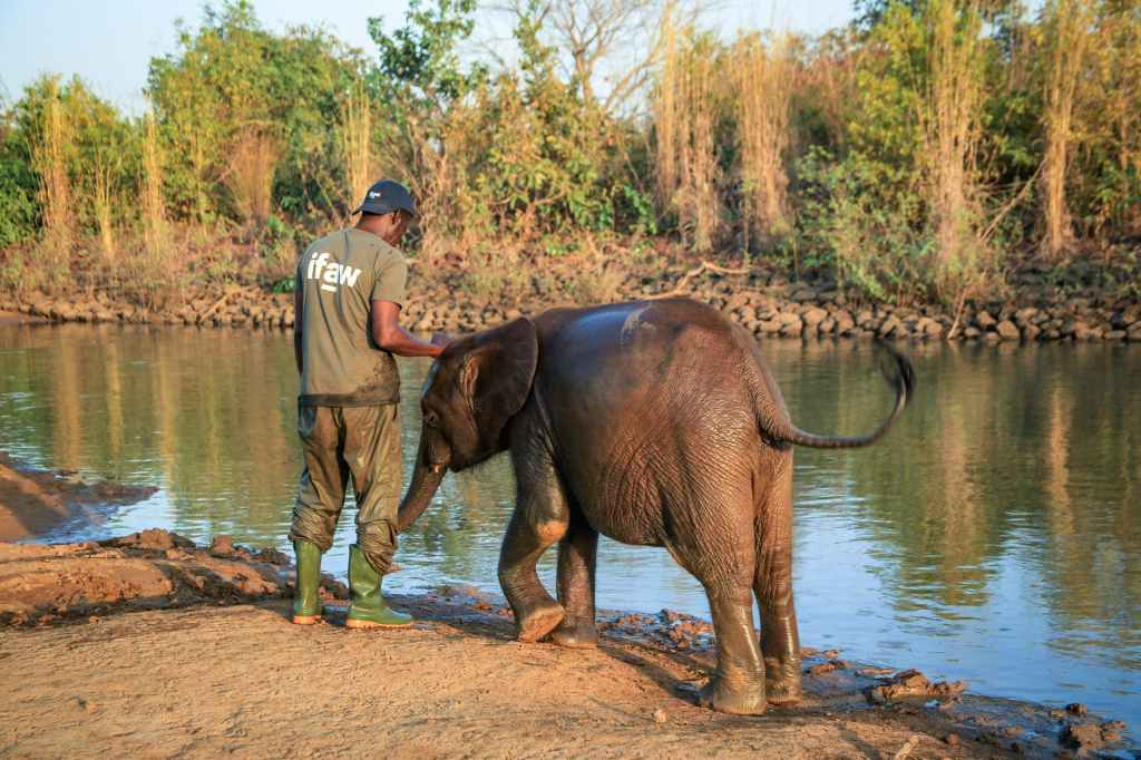 man and baby elephant