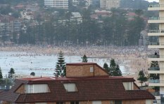 summer-manly-crowd