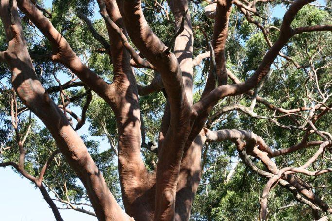 tree-study-1
