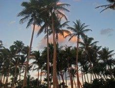 v-sunset-palms