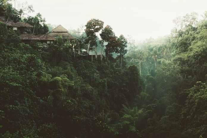 jungle azië