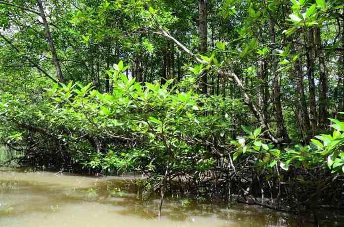 jungle rivier 2