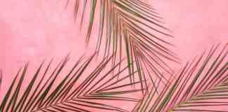 Bladeren op roze